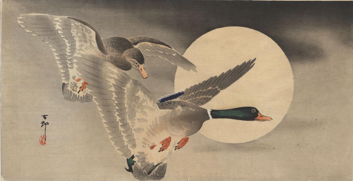 KOSON  (1877-1945). Two mallards. (Sold)
